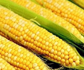 Рекомендации по выбору кукурузы при грудном вскармливании