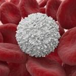 У грудного ребенка повышены лейкоциты в крови: основные причины