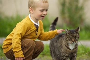 Мальчик гладит пушистую кошку