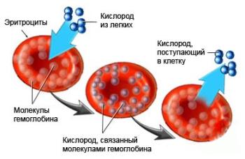 Общие сведения о гемоглобине в крови у детей до года