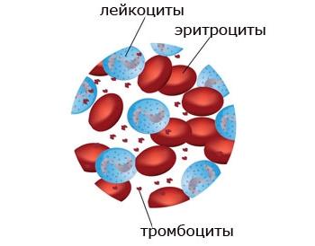 Уровень лейкоцитов в крови у детей до года и старше