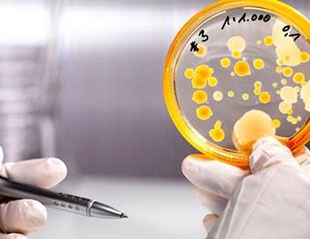 Расшифровка анализа кала на дисбактериоз у новорожденного ребенка