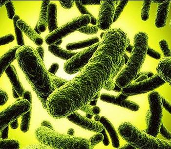 Расшифровка анализа кала на дисбактериоз у грудничка