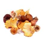 Лесные грибы при грудном вскармливании: можно или нельзя?
