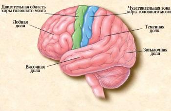 Локализация эпилепсии у детей