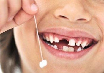 От чего  зависит скорость прорезывания постоянных зубов?