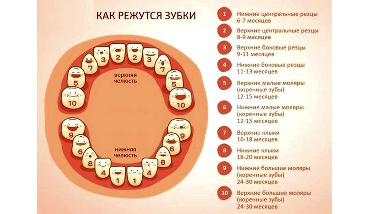 Молочные зубы у детей: схема прорезывания на фото